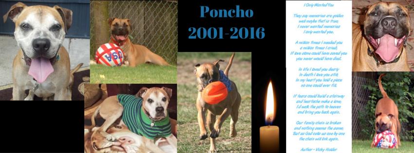 Poncho Tribute